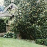 Arbour with Shrubs - YGA00316<br /><br />