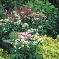Summer Planting in the Paved Garden - YGA00289