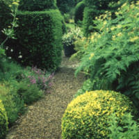 Herb Garden with Box Hedges - YGA00285<br /><br />