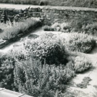Early Photograph of Herb Garden - YGA00076