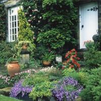 Front Garden  - YGA00288