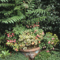 Circular Trough and Ailanthus - YGA01667