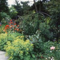 Front Garden Border - YGA00282