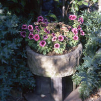 Round Stone Trough with Petunias - YGA01666