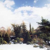 Front Garden in Snow -YGA00321